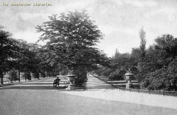 Lime tree avenue, 1910
